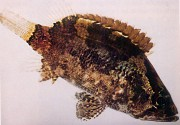 photo of whole fish, side view